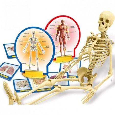 Imagine 2Experimentele micului geniu - Corpul uman