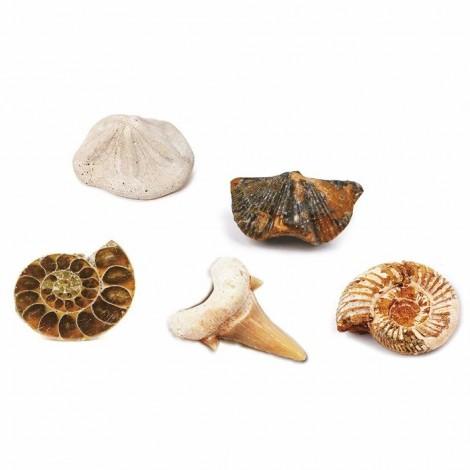 Imagine 2Kit paleontologie - Descopera fosile