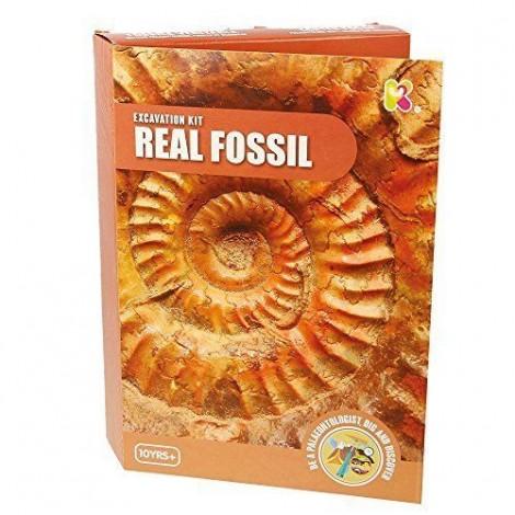 Imagine 1Kit paleontologie - Descopera fosile